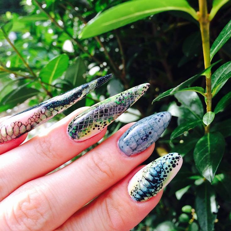 9 best Snake skin images on Pinterest | Indigo nails, Gel polish and ...