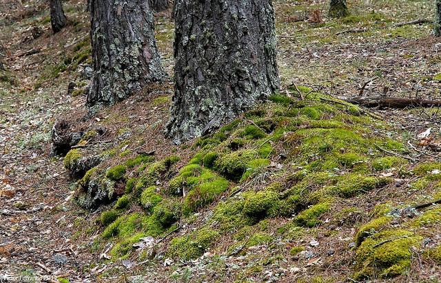 Sierra de Madrid - Mirador de los Robledos
