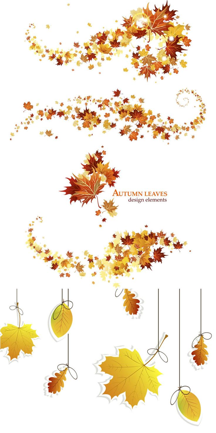Fall leaves designs vector