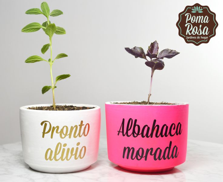 Dale color a tu cocina y a tus comidas con estas hermosas plantas que son de gran utilidad mientras cocinas!  Precio: $15.000 c/u