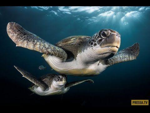 Лучшие подводные фотографии по итогам конкурса Underwater Photographer o...