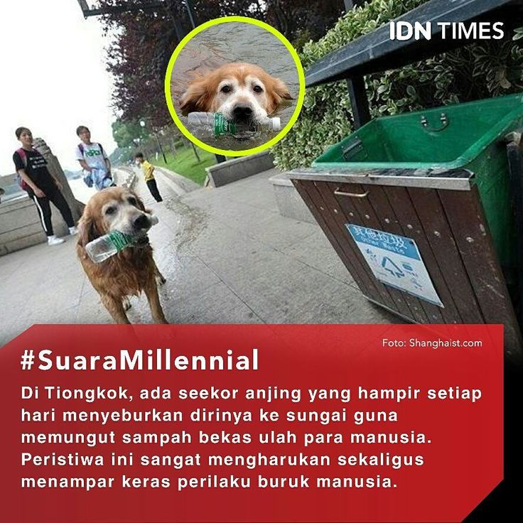Lihat, Anjing Saja Bisa Menjaga Kebersihan... ----- Follow @IDNTimes - The Voice of Millennials and Gen Z ----- Diketahui peristiwa mengharukan itu terjadi di Suzho. Tiongkok. Awalnya ada seorang pria lokal, dari Suzhou selama memelihara anjingnya tersebut belum menyadari bahwa sikap anjingnya yang luar biasa. ----- Ketika ia mengajak jalan santai dengan anjingnya , Ia menemukan keanehan pada anjing peliharaannya, kiranya anjing peliharaan itu memiliki sikap yang tidak biasa daripada anjing…