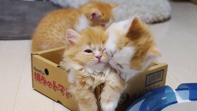子猫の画像って癒やされるよな