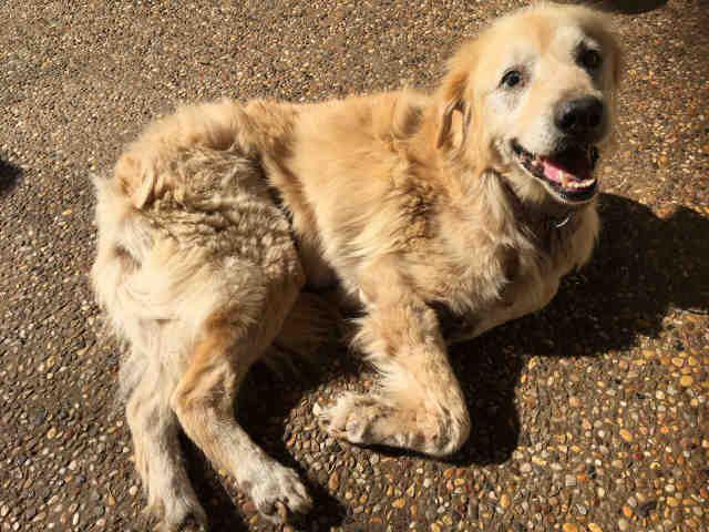 Www Petharbor Com Pet Sant A473536 Dog Adoption
