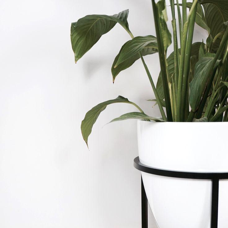 Black Bloom flowerstand