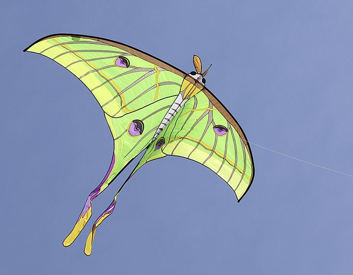 Luna Moth Kite, designed by Carsten Domann for Premier Kites. Photo by Wooden Nicol