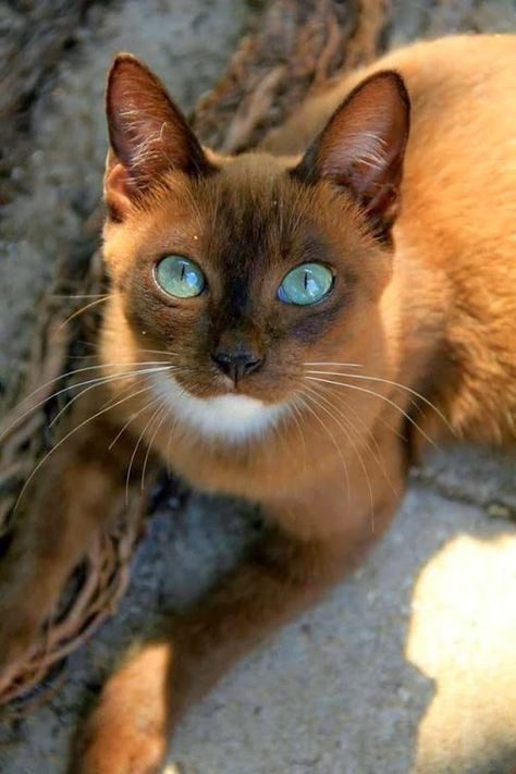 Not sure what kind of cat this is, but I love it!