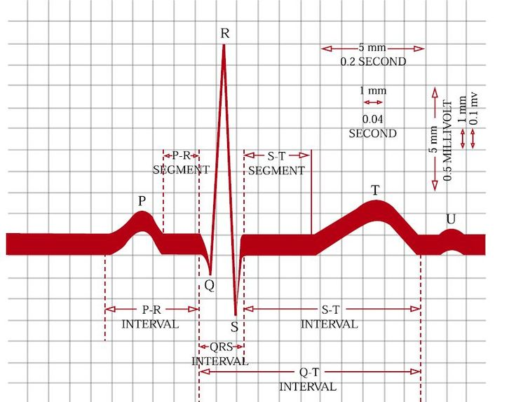 Best 25 Coronary Circulation Ideas Only On Pinterest Manual Guide