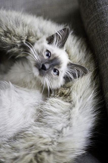 aww cross-eyed cutie!