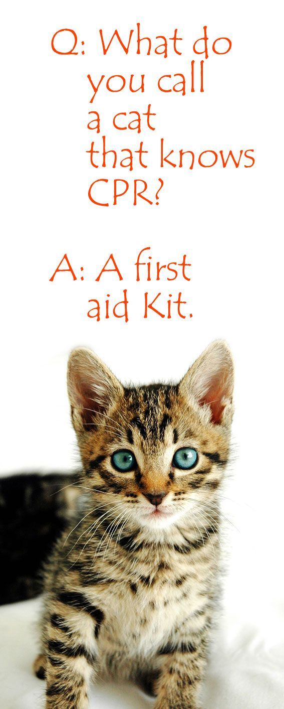 What do you call a cat that knows CPR? A first aid kit.