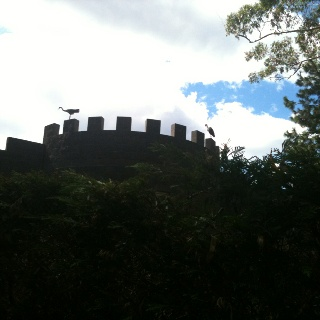 Two (not so baby) birds now left the nest & resting on The Castle On Tamborine
