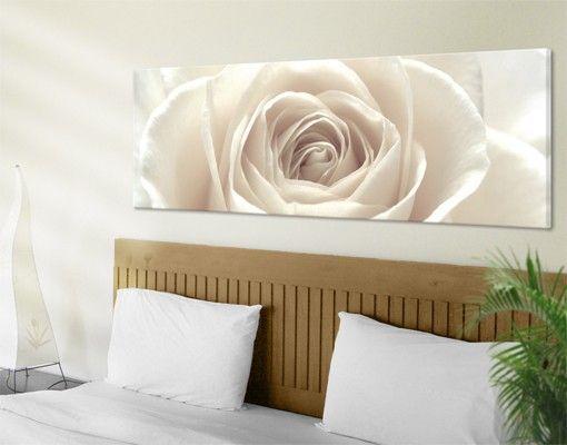 #Leinwandbild Pretty White #Rose #Panorama #Bild #Rose #Rosen #Rosengarten #Blumen #Dornen #Liebe #Wandgestaltung #Dekoidee