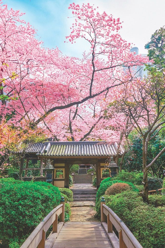 The Japanese Garden In Takanawa Has Over Twenty Varieties Of Cherry Trees And Sixteen Types Of Flow Japanese Garden Japanese Garden London Japanese Cherry Tree