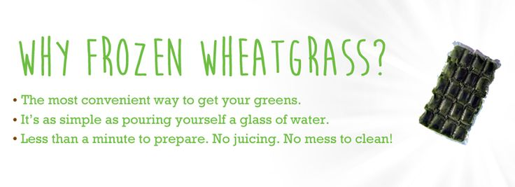 Our Ontario outdoor grown (under the real sun and in real soil) flash frozen unpasteurized wheatgrass juice is extremely bioavailable (accessible to the body); once the grass juice is consumed, absorption happens rapidly offering essential nutrients to bodily tissue. Each batch is laboratory tested and free of mold, fungus and environmental contaminants. #wheatgrass #giddy #organic