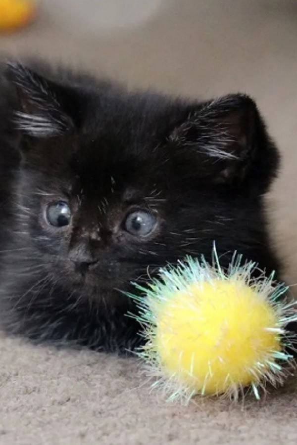 Kitten Found In Garden Gets Help To See Again And Reveals Her