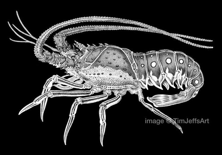 Spiny Lobster by Tim Jeffs | Art of Tim Jeffs | Lobster ...