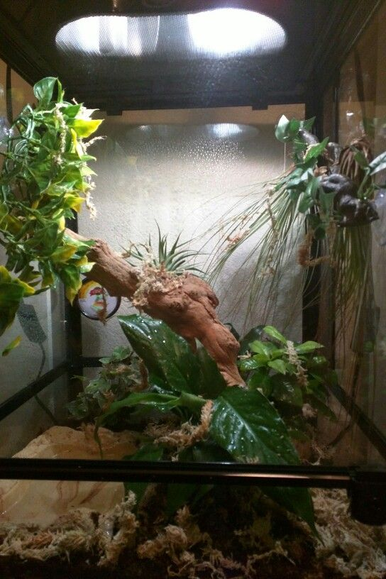Natural Terrariums Complete Herp Care
