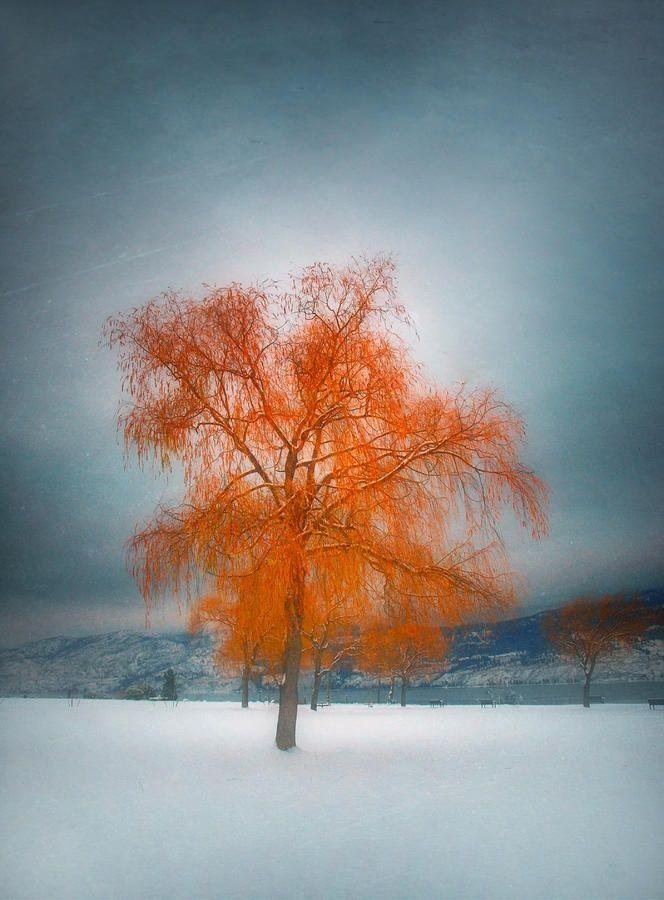 ✯ Dreams of Winter  #nature
