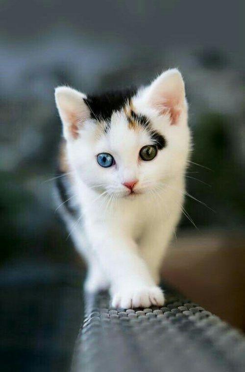 cat, animal, and kitten resmi