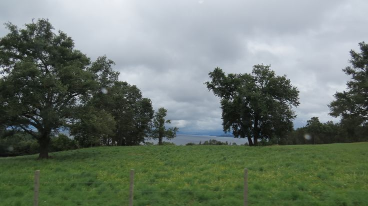 Verde sobre Lago Ranco