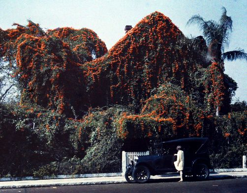 Florida - A girl gets into a car in front of a house covered in Flame vines, Tarpon Springs: Autochrome Circa, Bignonia Vines, 1920S 30S, Vines Autochrome, Girls, Florida, Cars, Front