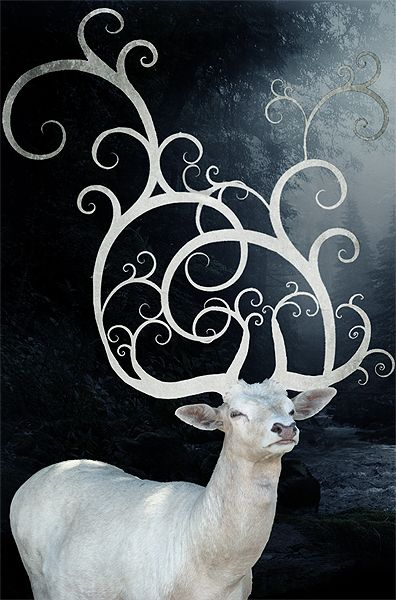 The colour white has long been associated with purity; and in Celtic culture, the colour also represented the otherworld.[2] In modern society, people have acted to protect the white stag as a vestige of beauty, and the hunting of the white stag has often met with anger, because of its rare and elusive nature.[6][7] White can also mean a symbol of peace or a truce.[8]  For early man, the deer resprented a valuable resource, providing nourishment, .