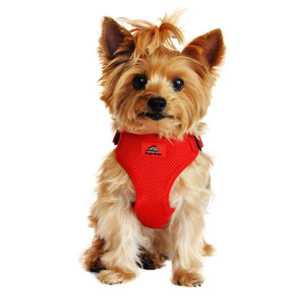 Flame Red Wrap And Snap Choke Free Dog Harness