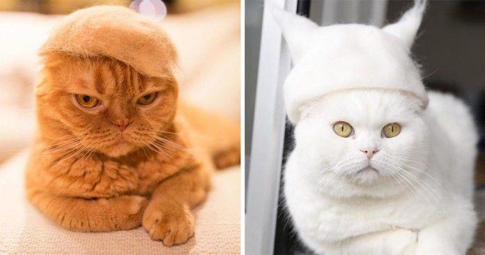 Χαριτωμένες γάτες φορούν καπέλα που φτιάχτηκαν από τις δικές τους τρίχες που είχαν πέσει - http://www.katapliktiko.com/%cf%87%ce%b1%cf%81%ce%b9%cf%84%cf%89%ce%bc%ce%ad%ce%bd%ce%b5%cf%82-%ce%b3%ce%ac%cf%84%ce%b5%cf%82-%cf%86%ce%bf%cf%81%ce%bf%cf%8d%ce%bd-%ce%ba%ce%b1%cf%80%ce%ad%ce%bb%ce%b1-%cf%80%ce%bf%cf%85-%cf%86/