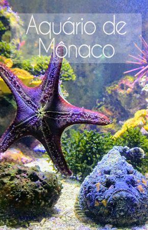 O Aquário de Mônaco é uma atração e tanto na cidade que muitos pensam que é só luxo, carros e casino. Confira como é aquário da cidade.