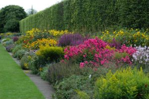 37 best images about herbaceous borders on pinterest for Herbaceous border design examples