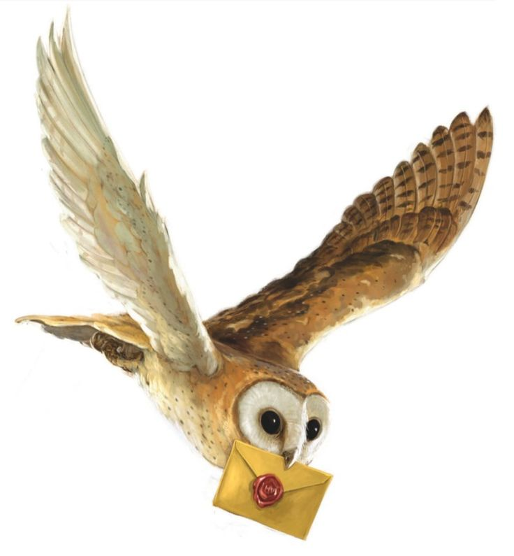 The new back cover art for #HarryPotterAndThePhilosophersStone UK! #HarryPotter #Hedwig