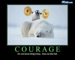 wake up!: Funnyquotes, Polar Bears, Brave Things, Funny Pictures, Funny Quotes, Funny Stuff, Penguins, Funny Animal, Funnystuff