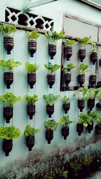 Independent Agriculture: cultivation in vertikultur
