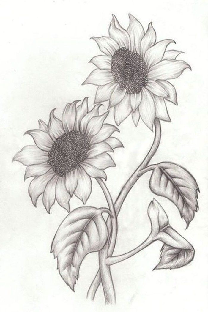 Two Sunflowers Intertwined Simple Rose Drawing Black And White Pencil Sketch White Background Pencil Drawings Of Flowers Sunflower Drawing Sunflower Sketches