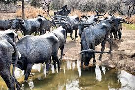 """Képtalálat a következőre: """"cattle drive dallas texas usa"""""""
