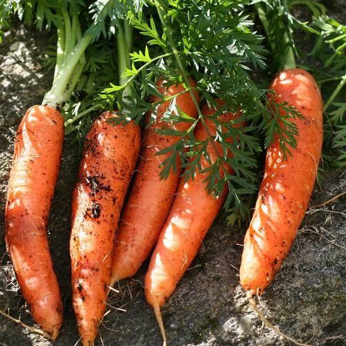 Légumes à panter en avril