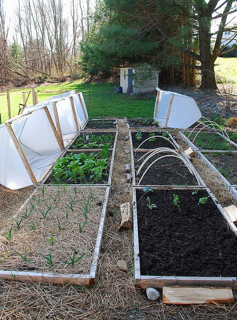 mini hoop houses - I like this picture. It gives me the idea of putting hinges on one side of the hope houses. It allows me to make them much smaller by being able to open them and close them.