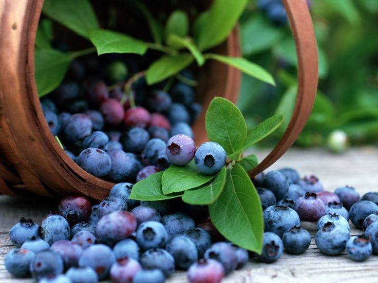 fruity-15(1).jpg (1024×768)