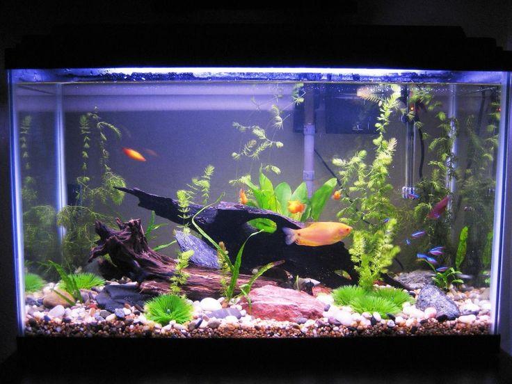 Tauchen Sie in die wunderschöne Welt von Aquaristik mit unseren kreativen Aquarium Einrichtungsbeispiele und hilfreiche Tipps ein!