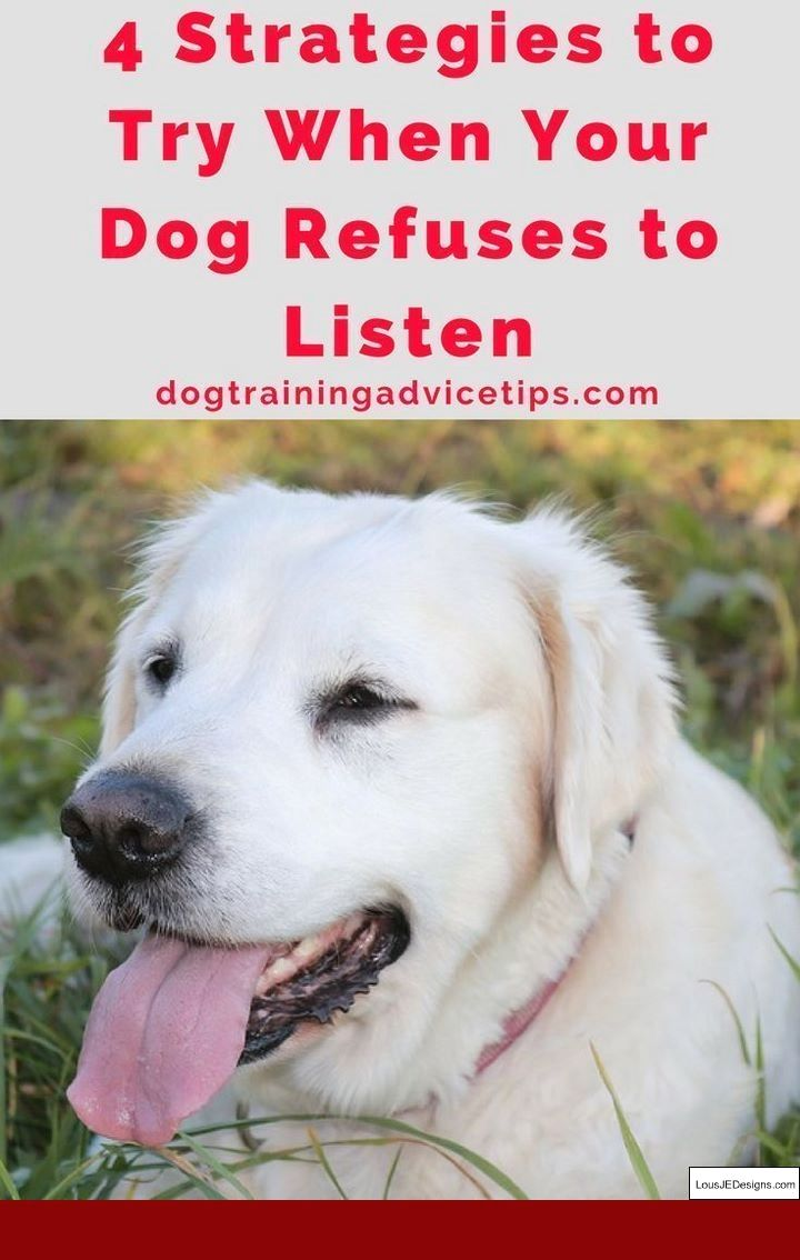 How To Train Your Dog To Shake And Pics Of Dog Training Tips For