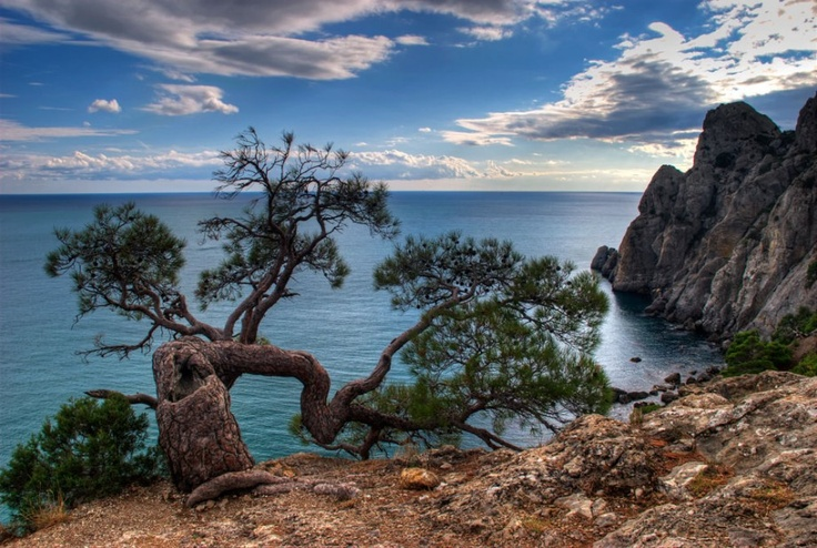Everything will be fine | sea, trees, rocks, evening