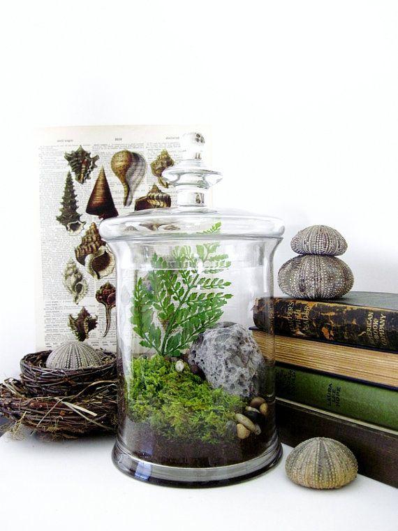 283 best images about terrarium ideas on pinterest terrarium ideas miniature and water terrarium. Black Bedroom Furniture Sets. Home Design Ideas