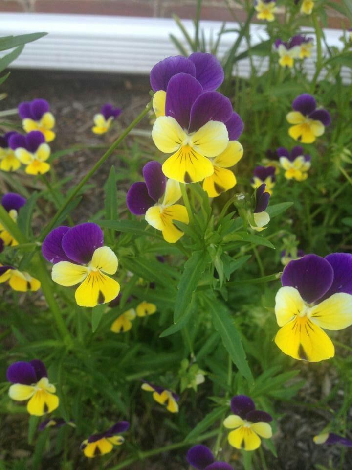 Purple and yellow flowers | Wedding Ideas | Pinterest