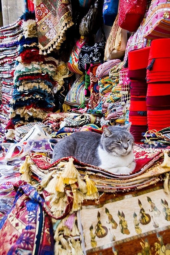 cat enjoying the carpets and thinking of taking a nap...