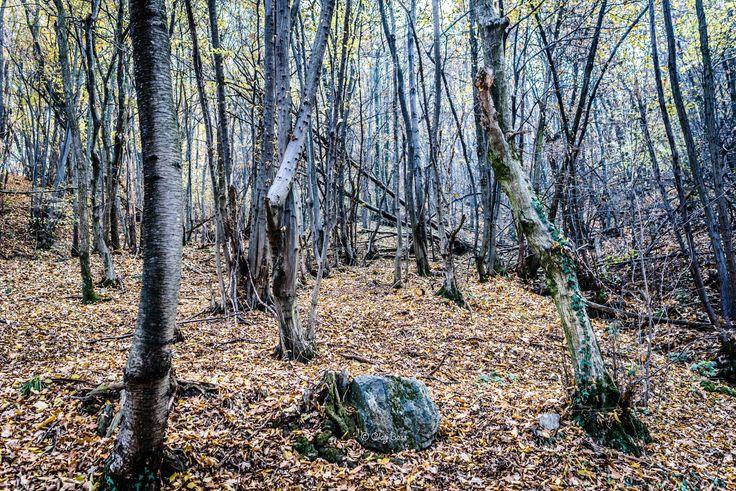 perdersi nel bosco a novembre - in realtà non mi sono perso ma la sensazione era quella