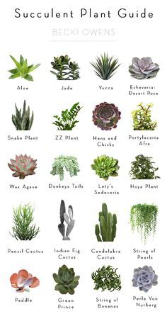 Today I'm sharing a Succulent Plant Guide to help you add beautiful texture and a fresh pop of green to your styled spaces.