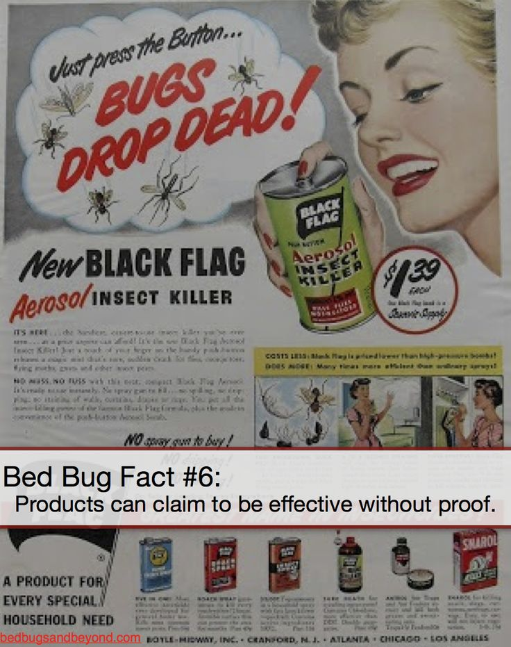 how to get rid of bed bugs baking soda