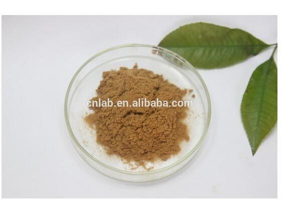 hot selling 5% Cynarin UV Artichoke Extract Cynara scolymus L fresh Artichoke Extract 800g/lot