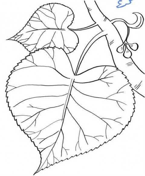 контурные рисунки листьев