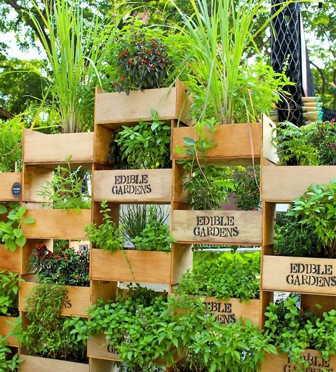 Grow your own food in your garden with this simple DIY project, where you can use old crates to grow and categorize herbs and vegetables. You can grow herbs like basil, thyme, and lavender that are not only good to consume but also protects the home from negative energies and bad odor.